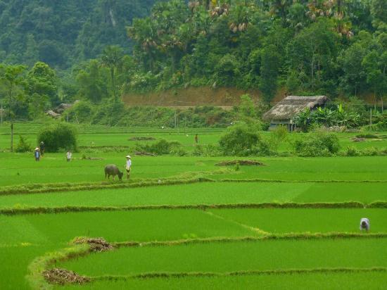 Thon Tha Village