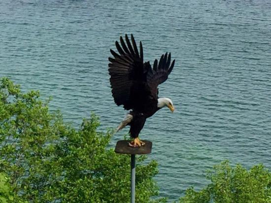 Graycliff Cottage Oceanfront B&B: Bucket List Check! View the feeding of the Bald Eagles...