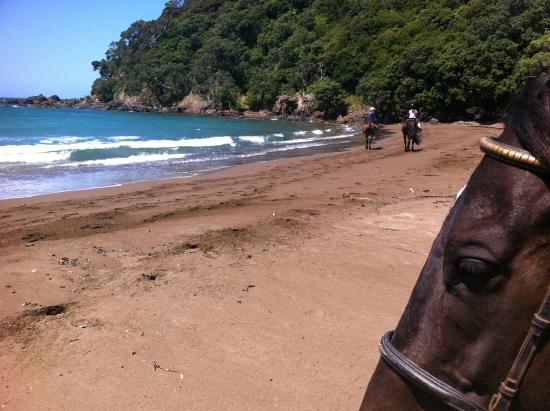 Вангарей, Новая Зеландия: sandy bay horse trekking