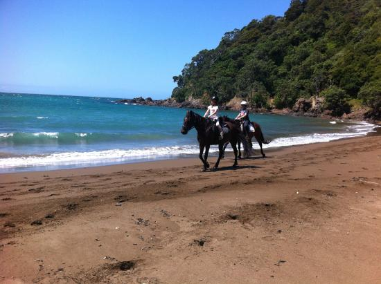 Whangarei, Nueva Zelanda: Stunning secluded northland beach