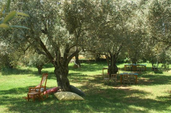 Emel Pension : De olijfgaard met oude bomen