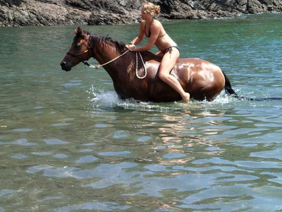 Whangarei, Nueva Zelanda: sandy bay horse treks