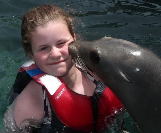 Oceanarium Explorer: Ein Kuss vom Seehund.