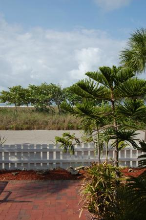 Beach Palms: View from Patio