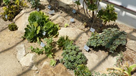 Serre tropicale d 39 exposition picture of jardin des for Resto jardin des plantes