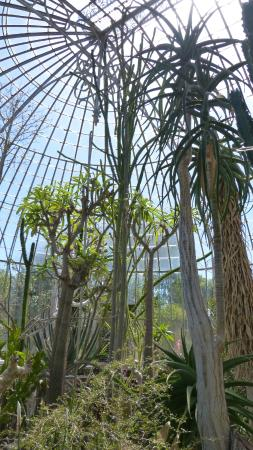 palmarium - Picture of Jardin des Plantes, Nantes - TripAdvisor