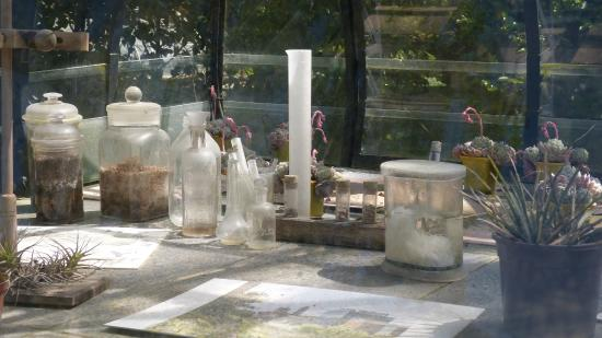 Serre fran ois delarozi re picture of jardin des plantes for Restaurant jardin des plantes nantes