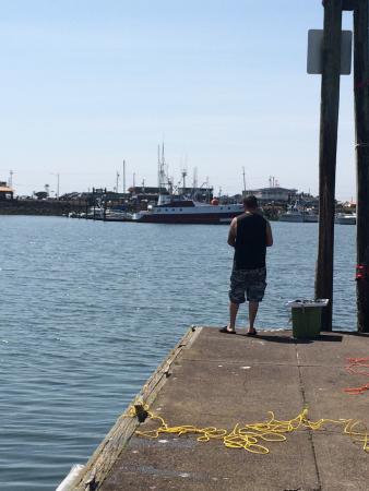 Harbor Resort: Crabbing!!!