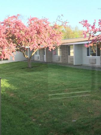 Ramada Rock Hill at Sullivan Center: Cherry trees in the courtyard