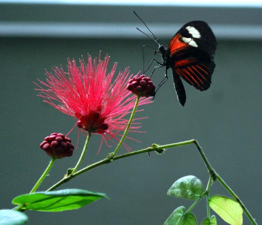 Image result for black and red butterfly