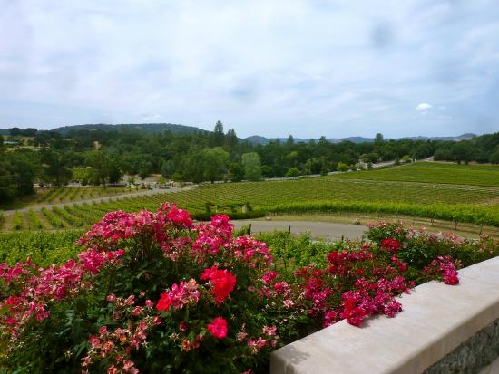 David Girard Vineyard: view from the event center