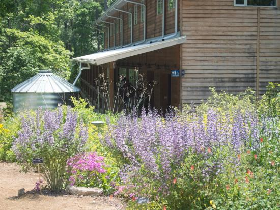 North Carolina Botanical Garden: Cistern, Building, And Baptisia Plants