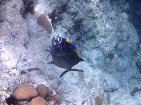 Zatoka Simpson, Sint Maarten: hungry fish