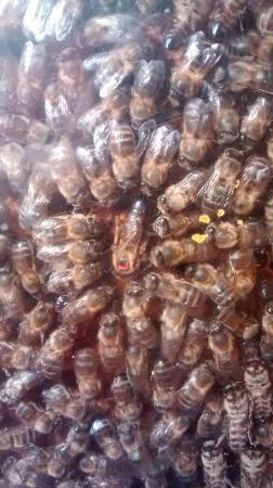 Urretxu, Spanien: Zona de exposición del museo, la abeja reina con su enjambre, y unos niños mirando dentro de la