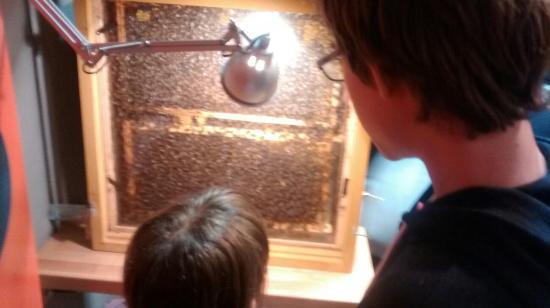 Aikur - Erle Museoa- Museo de Las Abejas