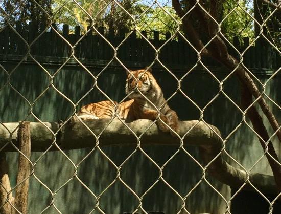 Tiger Habitat Picture Of Siegfried Roy 39 S Secret Garden
