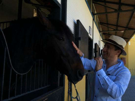 Yeguada de la Cartuja : Stallion
