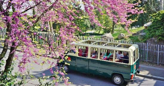 BrightSide Tours: Cruising the MontjuicHill on BrightSide's open-top vans