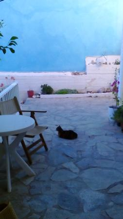 Hotel Galini Mare: welcoming entrance and friendly cat