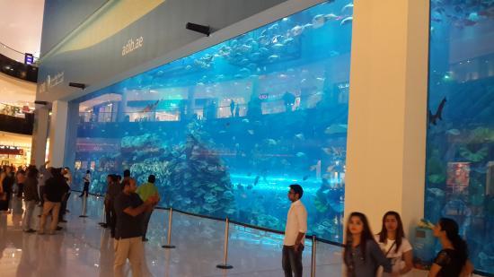 Water Feature Art Picture Of The Dubai Mall Dubai