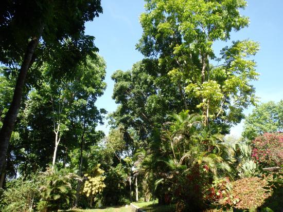 The Bungalow at Pantiya Estate: garden
