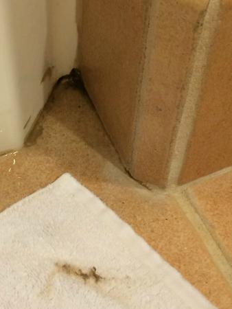 Floor next to tub/shower. Dirt/mold I wiped with towel before ...