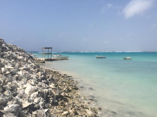 Goood resort, Goood dive Bonaire, Bonaire, paardrijden washikemba