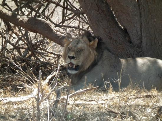 Ekea Safaris: big male