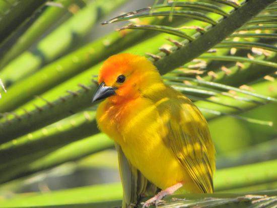Ekea Safaris: weaver bird