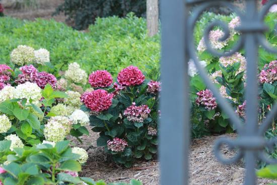 Foto de Jardín Botánico de Cap Roig, Calella de Palafrugell: cap roig - TripA...