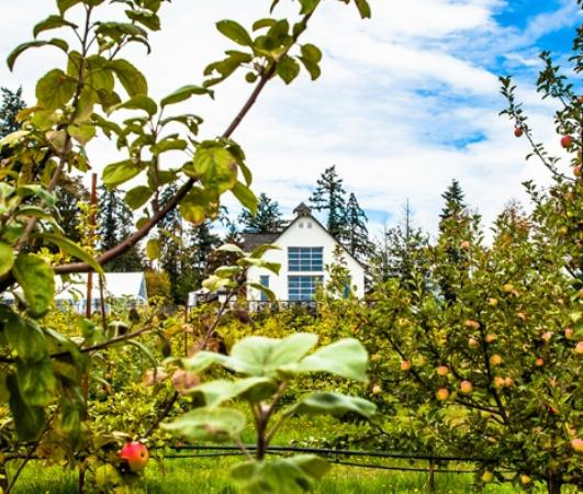 Central Saanich, Kanada: The ciderhouse from the orchard...