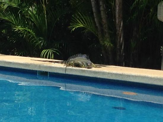 Nosara Beach House: A visit from one of the locals!