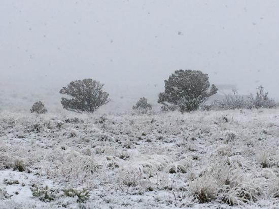 Dazzlers Best Casita: A snowy May day will bring fabulous wildflowers to the ranch.