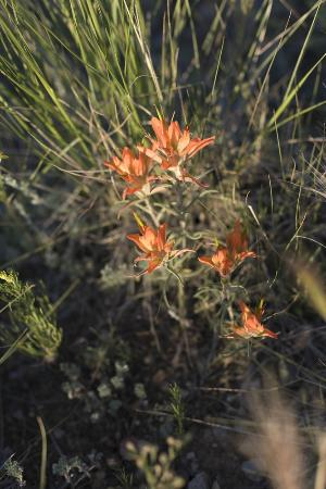Dazzlers Best Casita: We have already spotted Indian Paintbrush