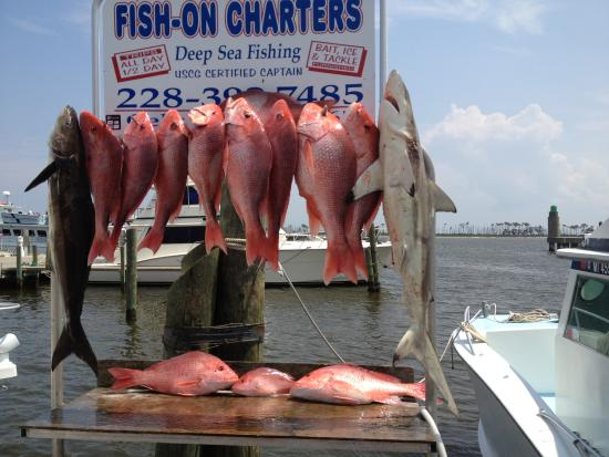 Fish-On Charters