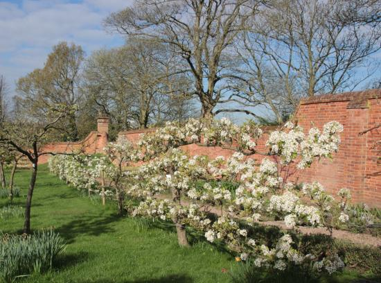 Castle Bromwich Hall Gardens : pear blossom on the espaliered fruit orchard...picnic time