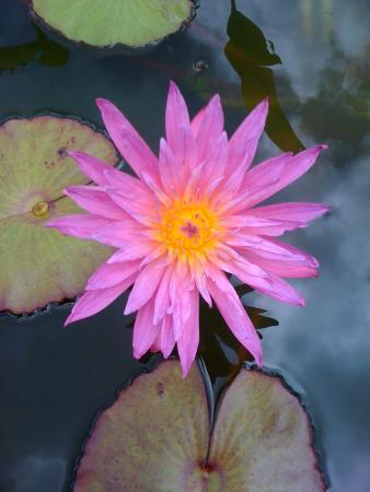 Lotus Flower Picture Of Natural Healing Massage Lihue Tripadvisor