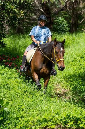 Whangarei, Nya Zeeland: sandy bay horses