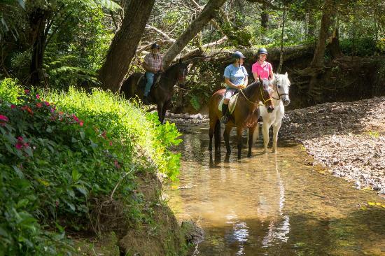 Whangarei, Nya Zeeland: sandy bay horse trekking
