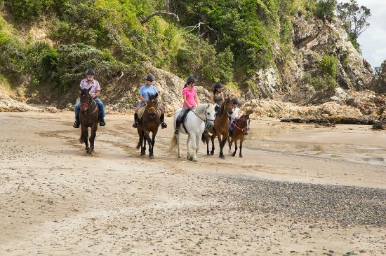 Whangarei, Nueva Zelanda: sandy bay horses, subject to season