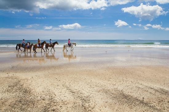 Whangarei, Nueva Zelanda: sandy bay horse trekking, subject to season