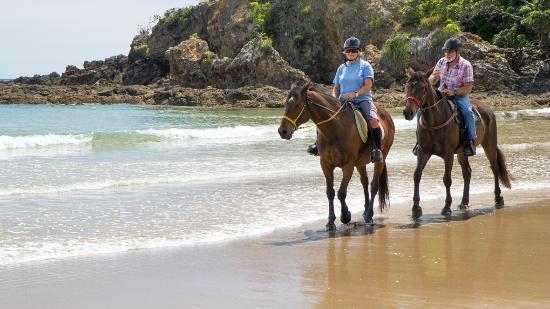วานกาไร, นิวซีแลนด์: sandy bay horse trekking, subject to season