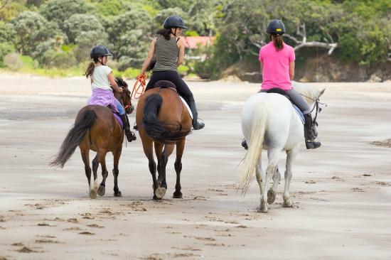 Whangarei, Nueva Zelanda: sandy bay horse trekking, subject to season