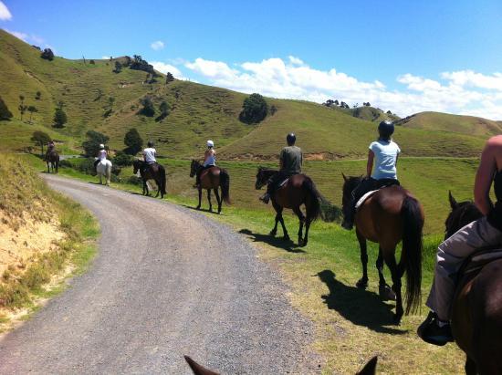 Whangarei, نيوزيلندا: sandy bay horse trekking