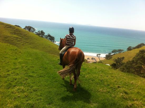 Whangarei, New Zealand: sandy bay horse trekking