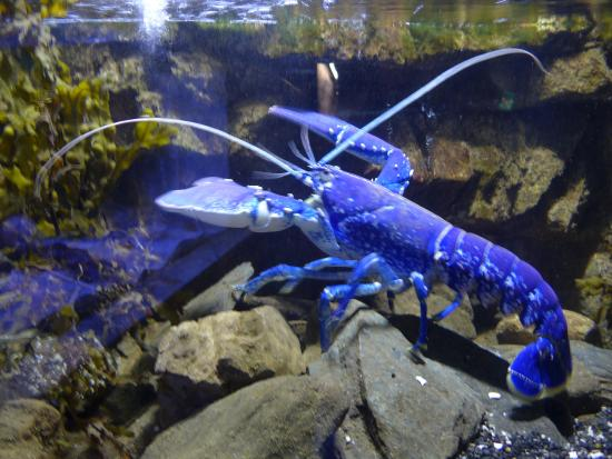 The Scottish SEA LIFE Sanctuary: Now, theres something you dont see...