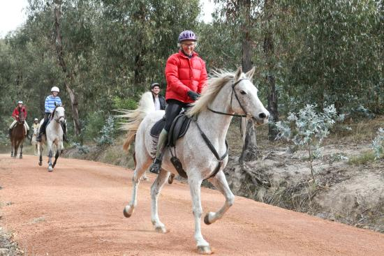 Stromlo Forest Park: Equestrian trails at Stromlo