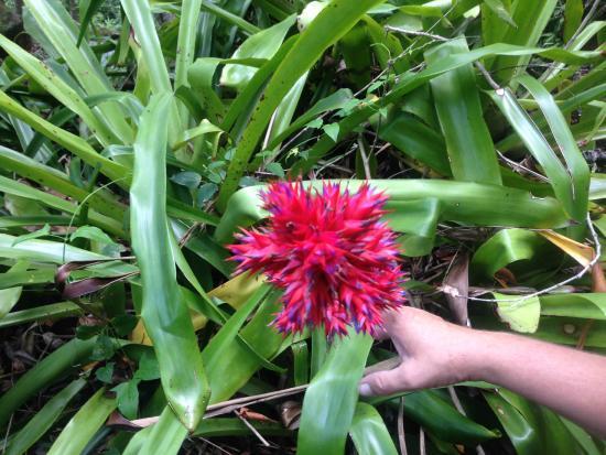 Kilauea, Hawái: Beautiful