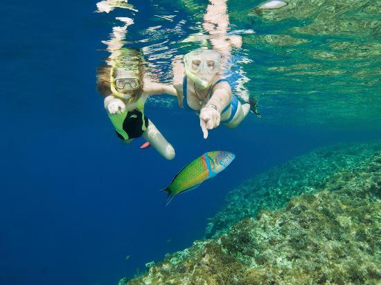 Валлетта, Мальта: Snorkling Fish