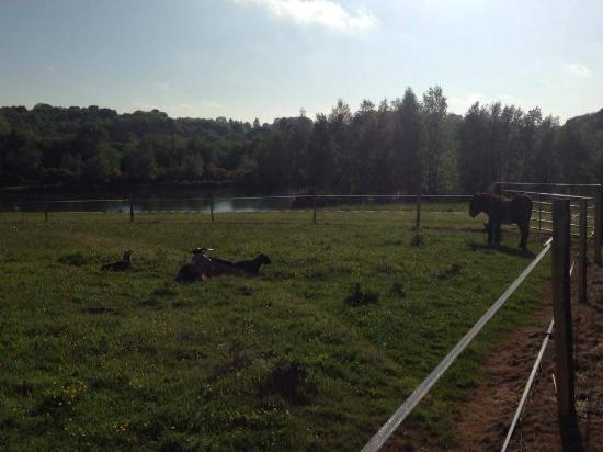 La Lande du Moulin: animaux